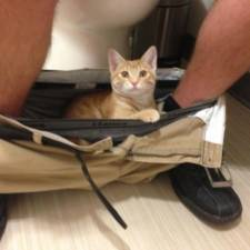 23-Funny-Cats-that-Love-Underwear-in-the-Bathroom-8__700