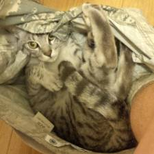 23-Funny-Cats-that-Love-Underwear-in-the-Bathroom-9__700