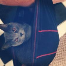 23-Funny-Cats-that-Love-Underwear-in-the-Bathroom-__700