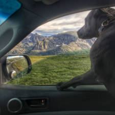 I-Live-in-My-Truck-with-My-Dog-and-Travel-Across-the-Country2__880