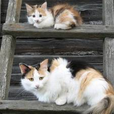 cat-and-mini-me-counterpart-18__700