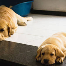 dogs-and-puppies-6__700