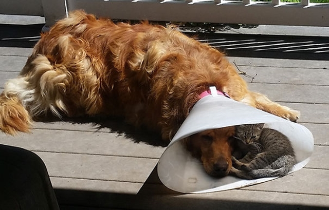 cats-and-dogs-getting-along-1__605