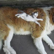 cats-and-dogs-getting-along-44__605