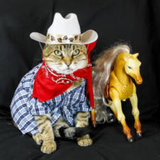The-Best-Dressed-Cat-On-The-Internet1__880