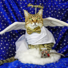 The-Best-Dressed-Cat-On-The-Internet2__880