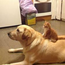 XX-Cats-And-Dogs-Getting-Along-6__605