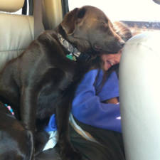Funny dogs violate personal space 21__605.jpg