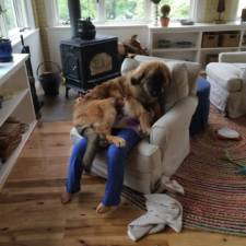 Funny dogs violate personal space 241__605.jpg
