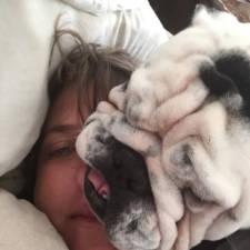 Funny dogs violate personal space 28__605.jpg
