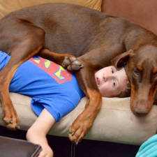 Funny dogs violate personal space 53__605.jpg
