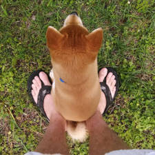 Funny dogs violate personal space 62__605.jpg