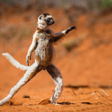 Funny animal pictures comedy wildlife photography awards 19__880 1.jpg