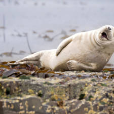 Funny animal pictures comedy wildlife photography awards 23__880 1.jpg