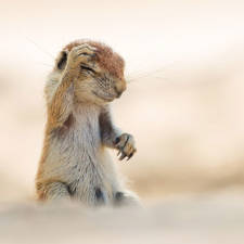 Funny animal pictures comedy wildlife photography awards 26__880 1.jpg