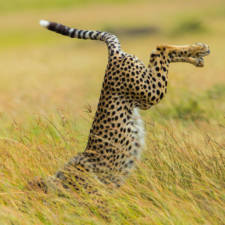 Funny animal pictures comedy wildlife photography awards 29__880 1.jpg