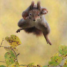 Funny animal pictures comedy wildlife photography awards 30__880 1.jpg