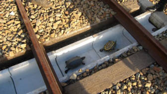 Turtle tunnel train track safety japan railways 1.jpg