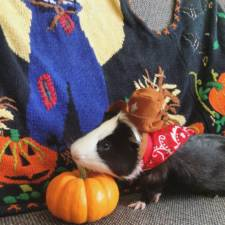 When a guinea pig is way more photogenic than its owner 11__880.jpg