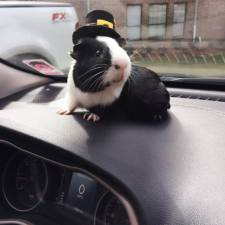 When a guinea pig is way more photogenic than its owner 13__880.jpg