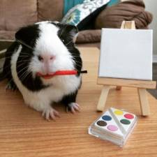 When a guinea pig is way more photogenic than its owner 3__880.jpg