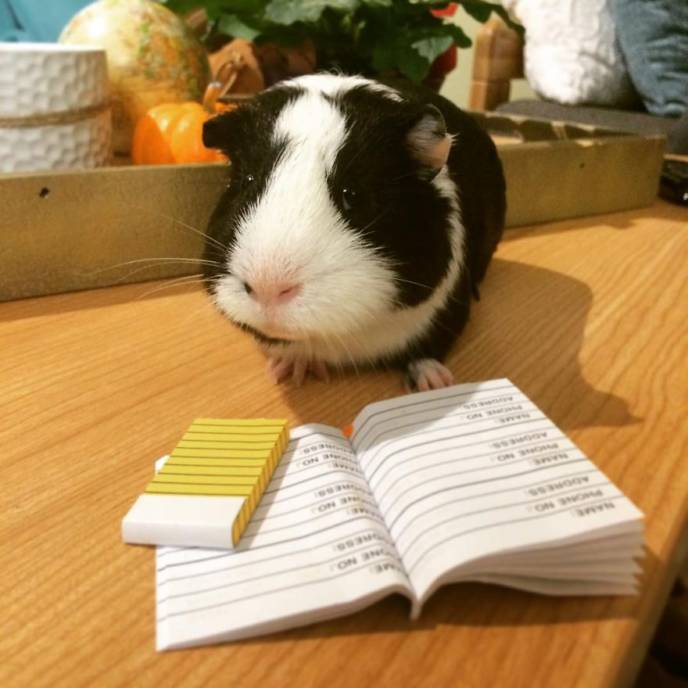 When a guinea pig is way more photogenic than its owner 6__880.jpg