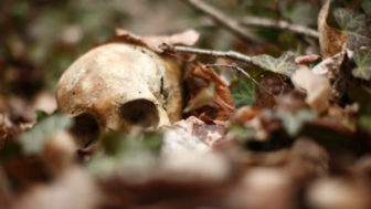 Human skull laying in the leaves in the forest