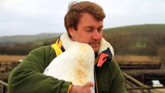 Injured swan hugs man richard wiese born to explore abbotsbury swannery 15.jpg