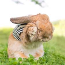 Worlds most stylish bunny puipui 26 571f65a570c01__700.jpg