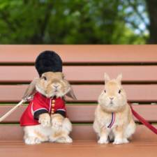 Worlds most stylish bunny puipui 28 571f65a988a4f__700.jpg