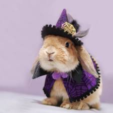 Worlds most stylish bunny puipui 571f67d0a12b1__700.jpg