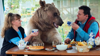 Adopted bear russian family stepan a20.jpg