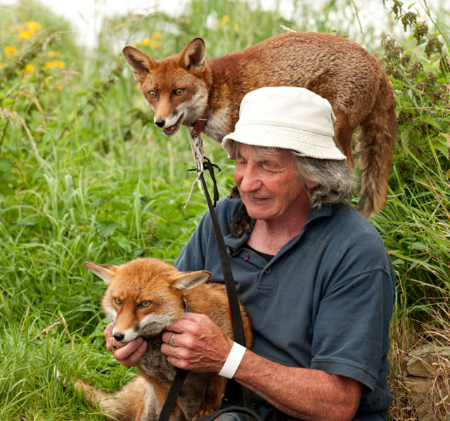 Pet foxes rescue patsy gibbons ireland 13.jpg