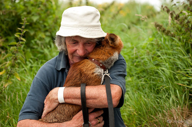 Pet foxes rescue patsy gibbons ireland 20.jpg