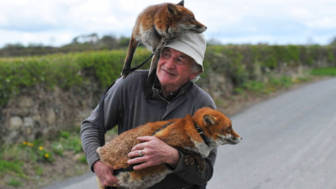 Pet foxes rescue patsy gibbons ireland 26.jpg