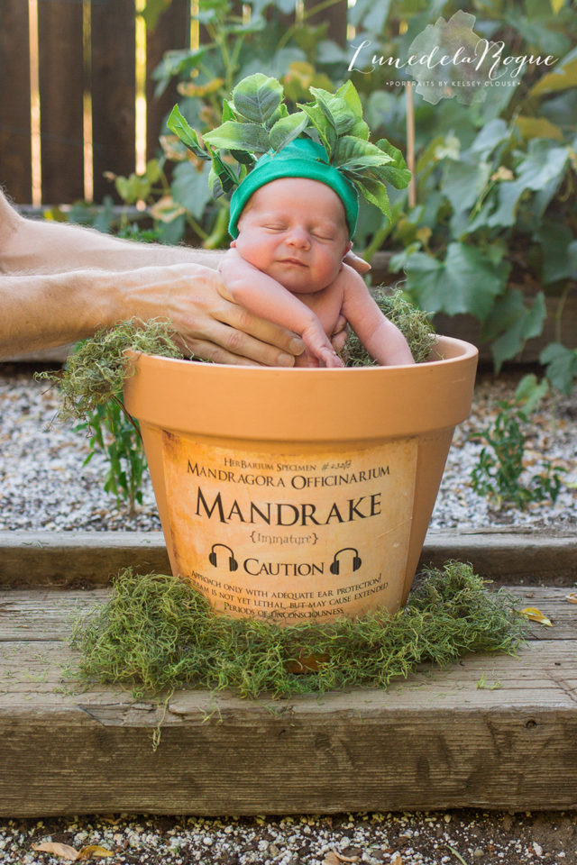 Harry potter themed newborn photography kelsey clouse 1.jpg