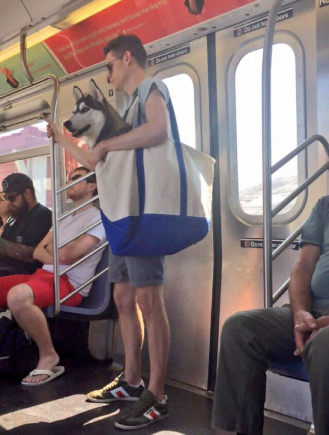 Man with giant dog tote bag new york subway 1a.jpg