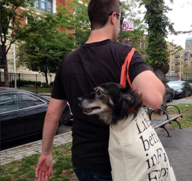 Man with giant dog tote bag new york subway 2a.jpg