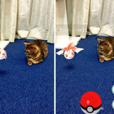 Pets can see pokemon go japan 2 57961c30d210c__605.jpg
