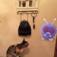 Pets can see pokemon go japan 24 579622ccdff8c__605.jpg
