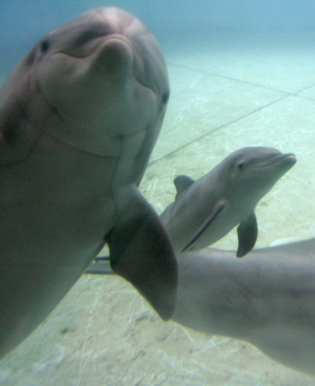 Dolphin Babies Birth