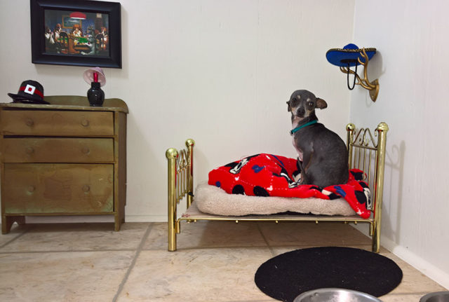 Room for chihuahua dog 1.jpg