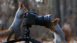 Squirrel photography russia vadim trunov 13.jpg