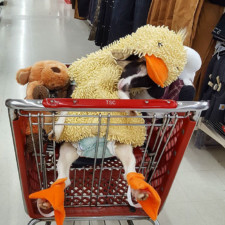 Rescue goat duck costume goats of anarchy polly leanne lauricella 14.jpg