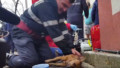 Firefighter saves dog gives cpr romania 1.jpg