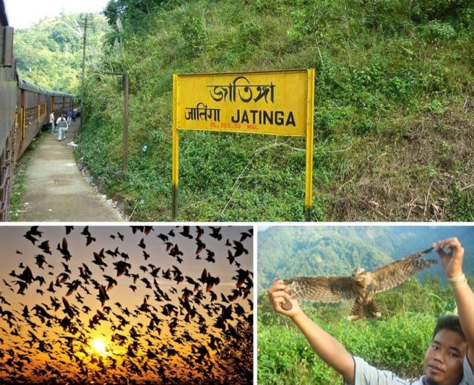 http://www.indialivetoday.com/jatinga-valley-mystery-luring-birds-death/8952.html