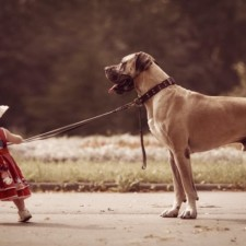 Little kids big dogs photography andy seliverstoff 24 584fa92ca8a9c__880.jpg