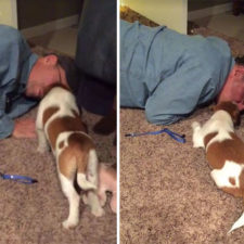 Dads who didnt want dogs 68 58808f94e3bde__605.jpg