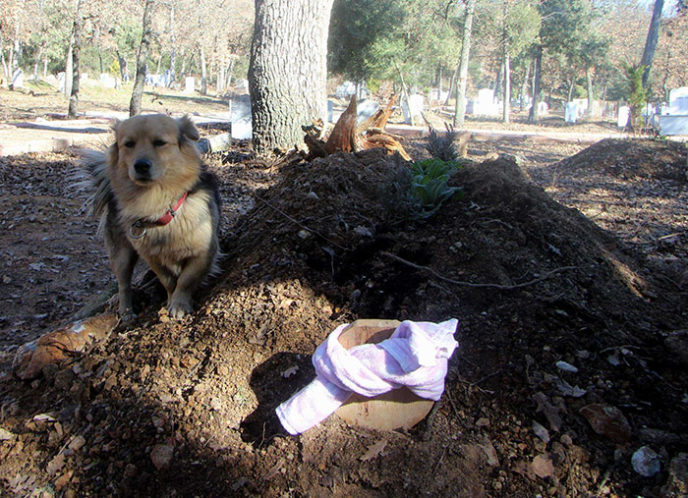 https://www.thedodo.com/dog-visits-grave-every-day-2211964715.html