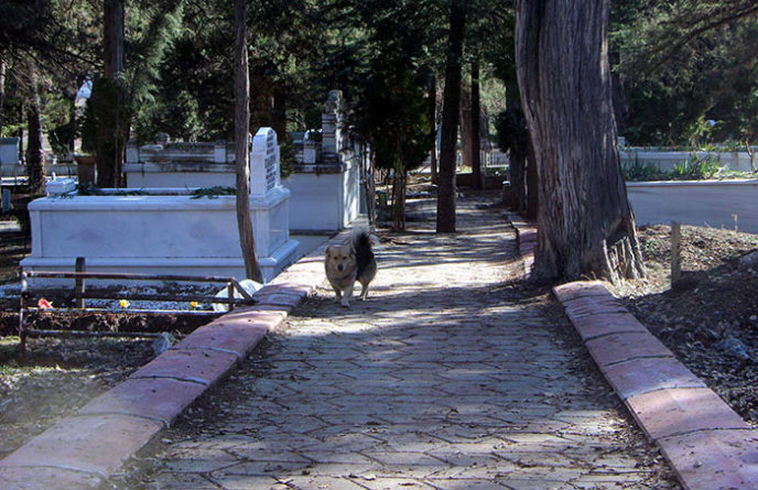 Dog visits owner grave every day cesur 9.jpg
